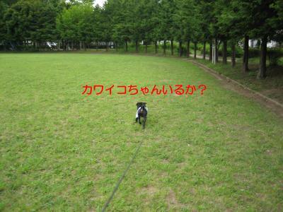 Img_0227_9