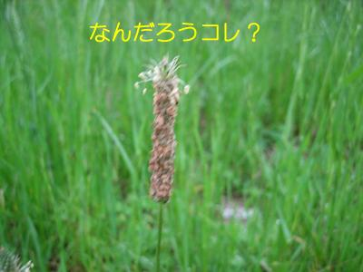 Img_1484_1