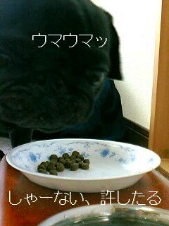 シャンプーの日