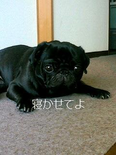黒犬を撮る